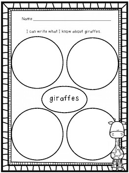 Giraffe Research and Giraffe Observations