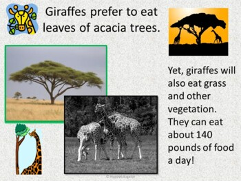 Giraffes PowerPoint - Fun Facts