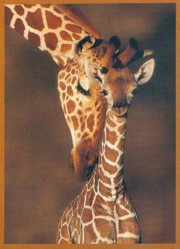 Giraffes: Tallest Animals Info Text w/ 18 Multiple Choice