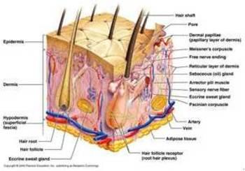 Glencoe Health Chapter 15 Lesson 1 Power Point Skin