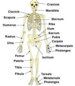 Glencoe Health Chapter 15 Lesson 2 Power Point Skeleton