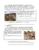 Global 1: The Neolithic Revolution