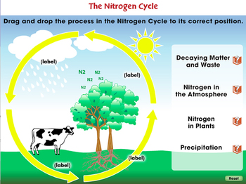 Global Warming CAUSES: The Nitrogen Cycle - NOTEBOOK Gr. 5-8