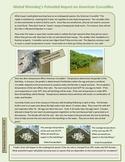 Global Warming's Potential Impact on American Crocodiles