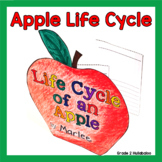 Apple Life Cycle Informational Texts, Close Reading Questions & Accordion Book