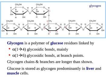 Glycogen Metabolism Explained (Handout / PPT Presentation)