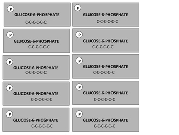 Glycolysis Activity Pieces (Accompanies Glycolysis Activity Sheets)