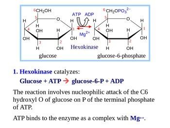 Glycolysis - Biochemistry of Metabolism (Handout / PPT Presentation)