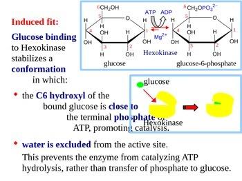 Glycolysis - Biochemistry of Metabolism (Handout / PPT Pre
