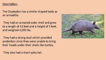 Glyptodon - extinct armadillo species power point facts information overview
