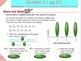 Go Math Interactive Mimio Lesson 9.1 Line Plots