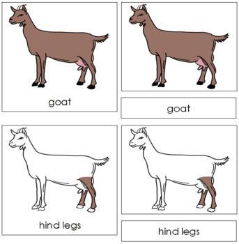 Goat Nomenclature Cards
