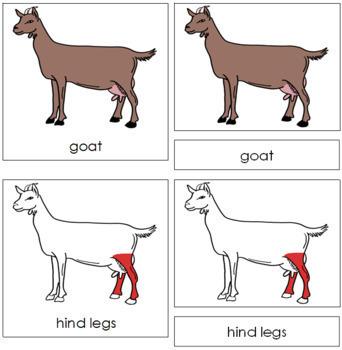 Goat Nomenclature Cards (Red)