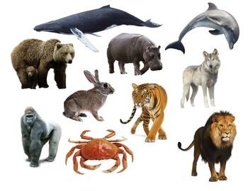 Gogokid K2 U5 Animal Lesson Props