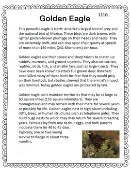Golden Eagle Close Reading Informational Text FSA practice