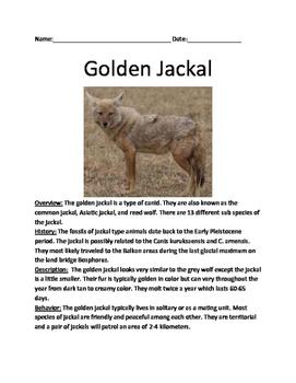 Golden Jackal - lesson review article facts information questions vocab