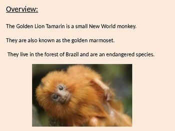 Golden Lion Tamarin - Power Point information facts pictures