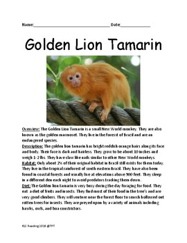 Golden Lion Tamarin - endangered species monkey lesson aritcle questions facts
