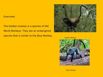 Golden Monkey - Power Point - Information Pictures Facts