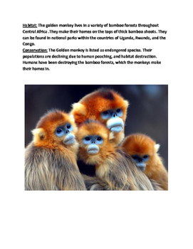 Golden Monkey - endangered - lesson review article questions vocab word search