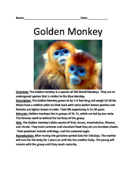 Golden Monkey - endangered - lesson review article questio