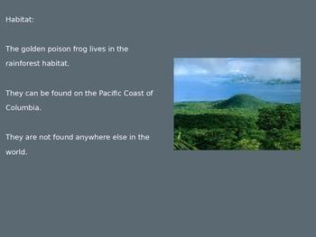 Golden Poison Dart Frog - Power Point - Information Facts Pictures 9 Slides