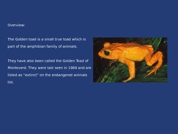 Golden Toad - Extinct - Information History Pictures Facts Power Point