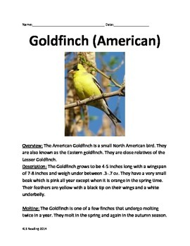Goldfinch - Bird - Informational Article facts questions vocabulary