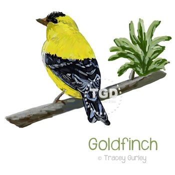 Goldfinch Bird on Branch Painting Printable Tracey Gurley Designs