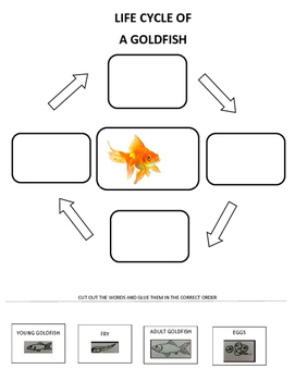 Goldfish Life Cycle