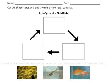 Goldfish Life Cycle - Cut and Glue Sequence Activity