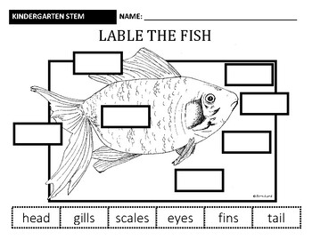 ALL ABOUT FISH: SCIENCE IN KINDERGARTEN