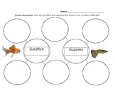 Goldfish and Guppies Double Bubble Map
