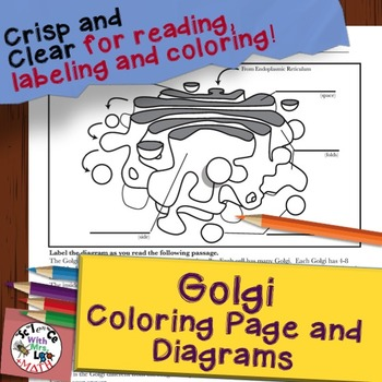 Golgi Cell Diagram Coloring Page and Reading Page