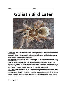 Goliath Bird Eater ! Spider Informational article questions facts
