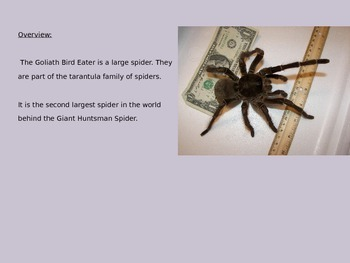 Goliath Birdeater - Spider Power Point Information Pictures Facts