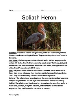 Goliath Great Heron - Informational Article Lesson Questions Vocabulary