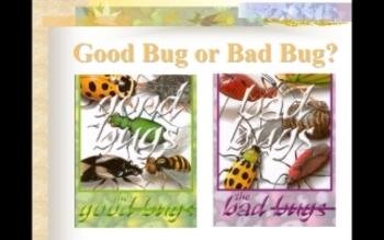 Good Bug or Bad Bug? PowerPoint