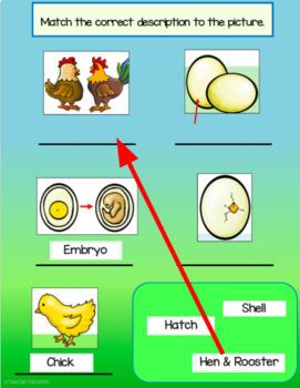 Google Classroom Science: Chicken Life Cycle Flip Book & Activities