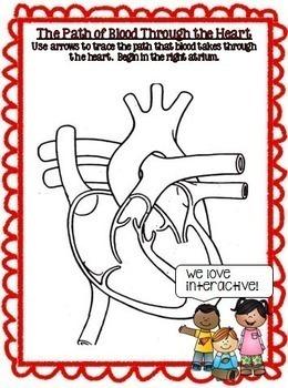 Circulatory System Human Body Report Google Drive Activities