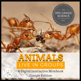 Google Interactive Notebooks: Animals Live in Groups