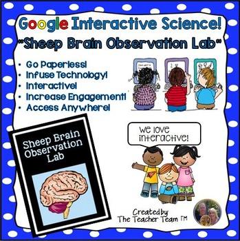 Google Drive Biology- Sheep Brain Observation Lab for Goog