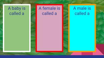 Google Slide My Animal Report