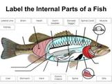 Google Slides: Label Internal Parts of a Fish