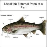 Google Slides: Label the External parts of a Fish