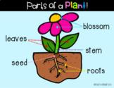 Google Slides: Parts of a Plant - 2 Activities, Google Pos