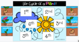 Google Slides: Plant Life Cycle (Digital Resource)