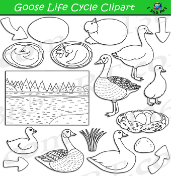 Goose Life Cycle Clipart