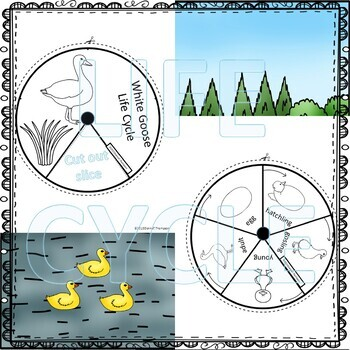Goose (Life Cycle Spinner)