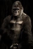 Gorilla Digital Puzzle VIPKID